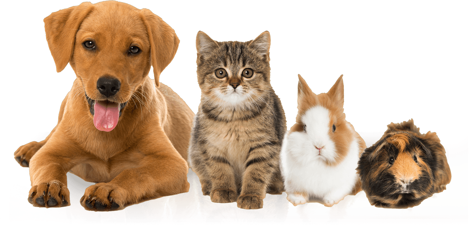 We care for your pets at Birchwood Vets