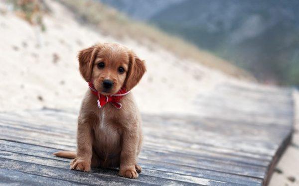 puppy pet care at Birchwood Vets